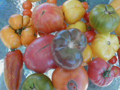 Heirloom Tomato Special